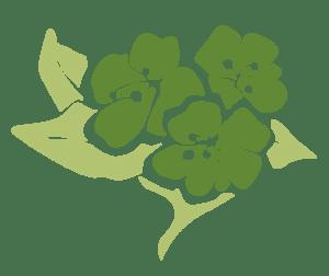 Purity Herbs logo huidproblemen