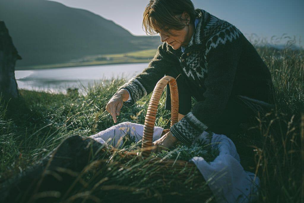 IJslandse kruiden plukken